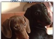 buddy & Rolo