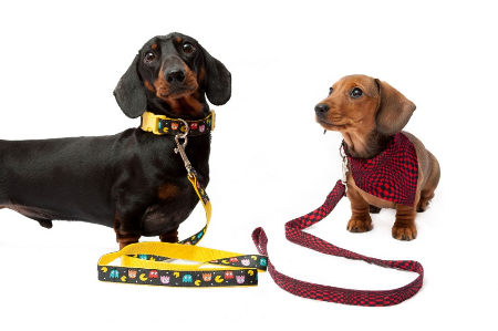 Dachshund specific clothes