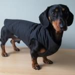 Debonair dachshunds Waterproof Black